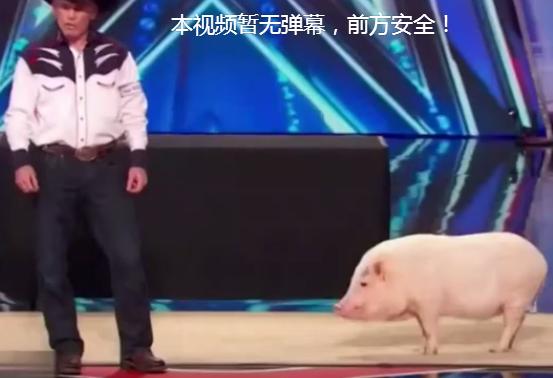 猪很笨?看看航天工程师训练出来的猪吧!