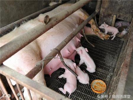猪场用的漏缝地板分哪几类啊?