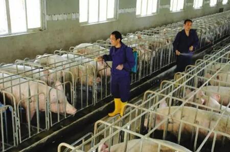 养殖户注意啦,猪场消毒技术要领全在这了