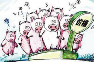 农民学养猪,9月猪价分析及未来几月趋势