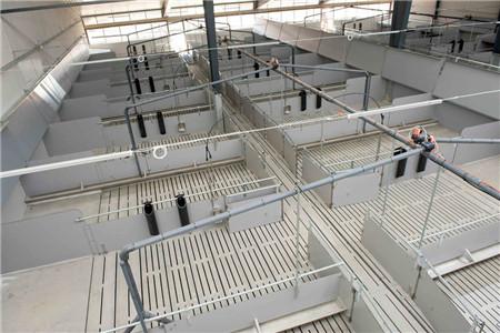 1、建好猪舍:要想养好猪,就要尽量给猪提供舒适的生活环境。猪舍要做到采光通风好,冬暖夏凉。