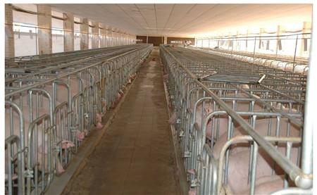 4、做好管理:养猪靠技术,更靠管理。只有认真做好管理好,猪场才能良好运营。猪场运营良好,最终才能赚到钱。