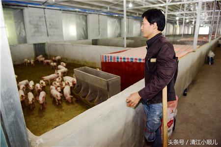 在建设沼气池时,政府补贴了12万,150养猪场建设上,政府补贴了10万。在猪场的建设上,以前建设的猪舍有1000多平方,今年又扩建了3500个平方.为了养猪,他到处借钱,东拼西凑,平场地、买钢架,建了800方的水池,目前在外的欠账150多万。