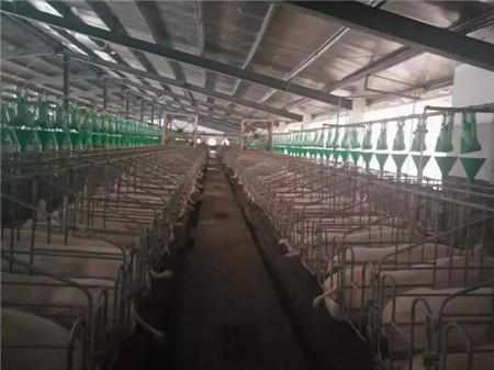 """据介绍,此次有两家公司指定为""""金砖会议""""期间的猪肉供应商,一家为厦门嘉烨兴农业科技有限公司,该公司主要供应会议期间的丹系猪肉"""