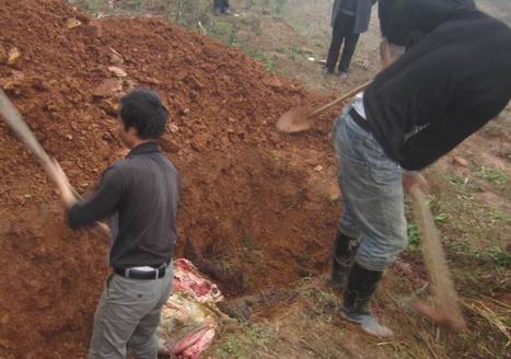 """""""人民日报评论""""微信公号9月11日消息,近日,在浙江开展环境保护督察的中央第二环境保护督察组揭开一起""""病死猪非法填埋""""案件的面纱。"""