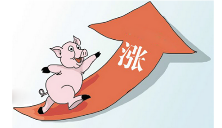 """生猪会迎来新一轮""""牛市""""吗?"""