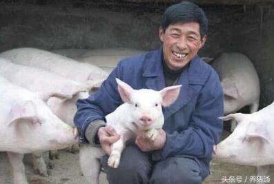 禁养、价低、大环境不好,养猪人还有未来吗?