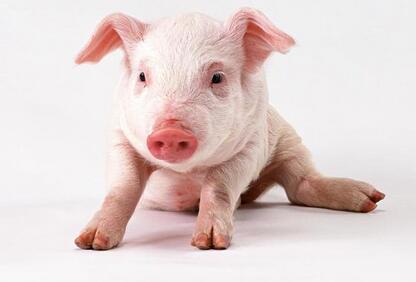 2017年9月18日(20至30公斤)仔猪价格行情走势