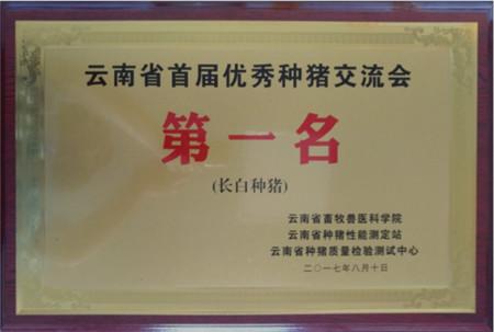 """云南天兆长白种猪摘冠""""云南省首届优秀种猪交流会 """""""