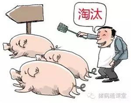 做好这点,你的养猪成本能下降一半!!