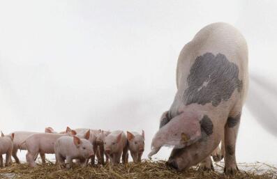 世界农场动物福利大会10月12日将于杭州召开