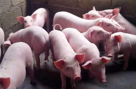 八大养猪巨头扩张已超2亿头,猪场还能赚钱吗?
