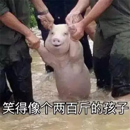 无抗才是小猪猪变胖的动力,扎心了老铁!