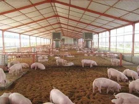 用实际案例告诉你,什么是生态养猪模式!