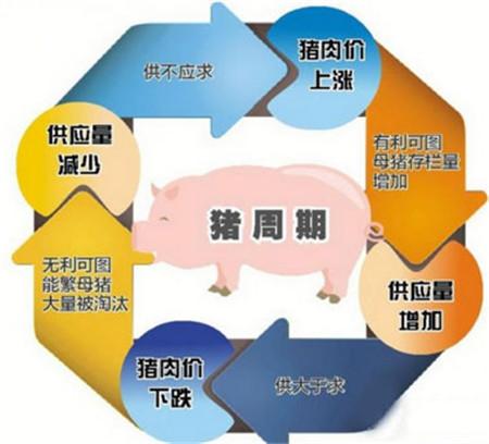 """""""猪周期""""的无限循环虽有变数但难以消失"""