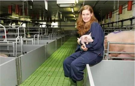 终于知道我国养猪业与西方的差距到底在哪里了