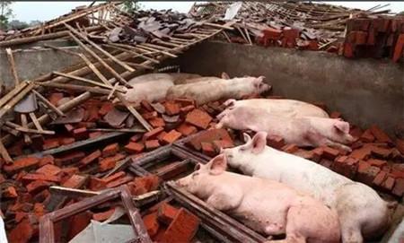 十七大党代表猪场被政府强拆,法院判强拆违法