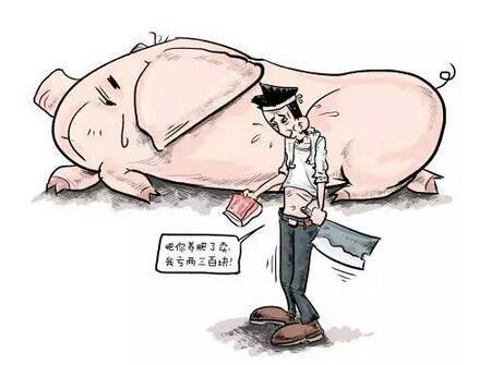 """猪价怎一""""涨""""字了得 说说那些猪价预测背后的故事"""