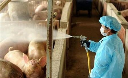 钱花了不少,猪病没治好!猪场流行性腹泻防治必须做好这几点!