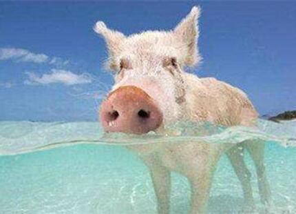 第十五届(道勤杯)健康养猪技术比赛活动通知