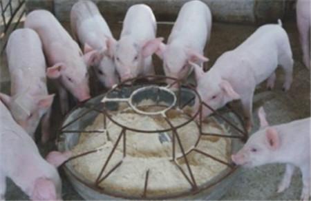 八招养猪方法降低生猪养殖成本