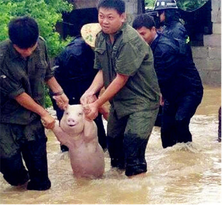 天蓬集团:这里的小猪比网红小猪还萌!