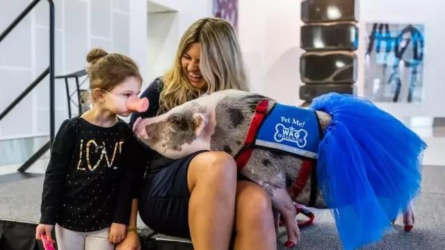 为取悦候机的熊孩子,美国这个机场养了头猪!