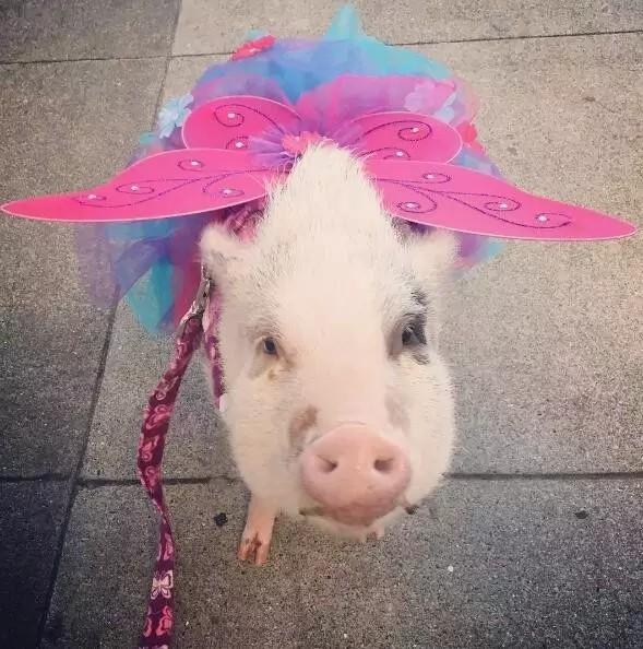 不上班的时候也得认认真真打扮一番,穿上最蝴蝶裙,依然是人群中的焦点。