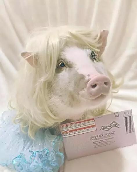 小胖猪说这张自拍绝对没有磨皮,它发誓。