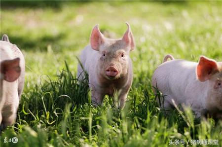 这几种常见猪病的临床症状有什么区别?