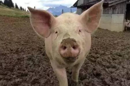 """养猪牢记""""三个区""""      因为养殖的污染问题,国家在南方水网地区,严格限制养殖业发展,对生猪养殖划定了三个区域:"""