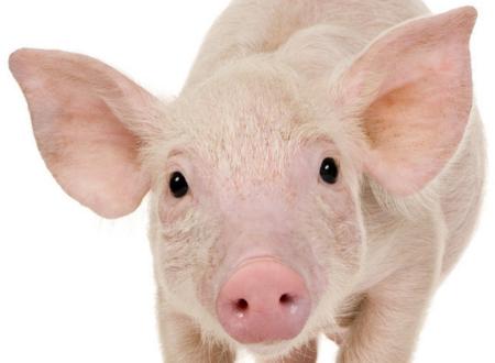 关于下半年猪价到底会怎样运行,网上有不少的帖子都进行了预测,说涨的有,说跌的也有,说会一直平稳运行的也有