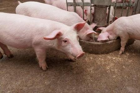 猪身上这3个部位要少吃,99%的人都不知道!