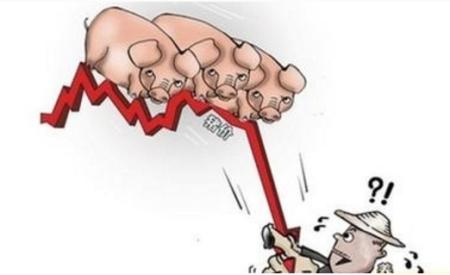 猪价一跌就骂屠企?其实背后还有更大的阴谋!