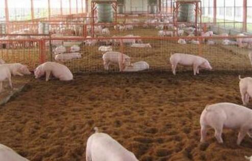 广东发布环保税征求意见稿,每猪收4.6元