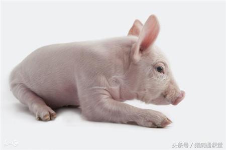 猪缺铁性贫血症的临床症状是什么?