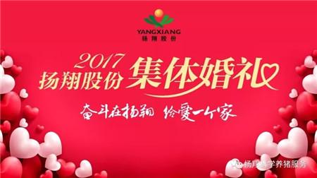 """""""奋斗在扬翔,给爱一个家""""——扬翔股份2017年集体婚礼今天举行啦~"""