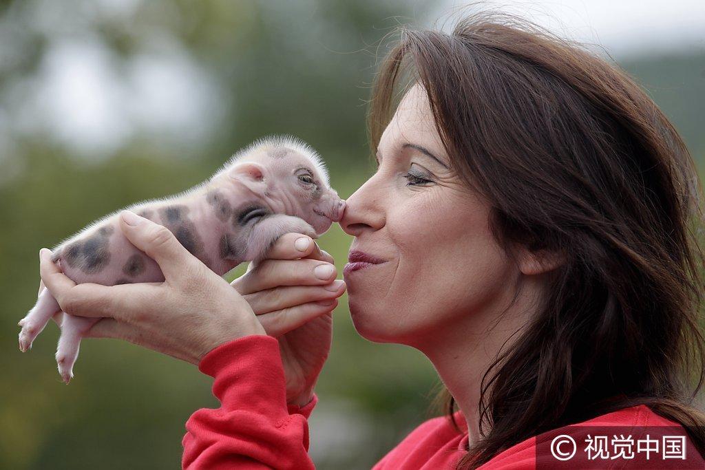 德国麦姆雷本动物园,迷你小猪诞生。