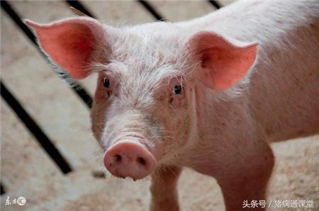 在猪病防治的过程中,使用药物经常会出现哪些问题?