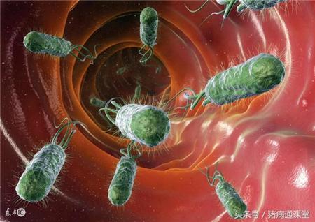 如何正确区分猪病毒性腹泻与细菌性腹泻?