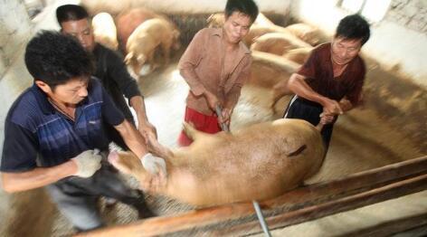 环保助力的超长猪周期 如何煽动猪产业链上的风风雨雨