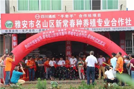 四川通威农合社链接养殖销路,让每个人吃上放心猪肉