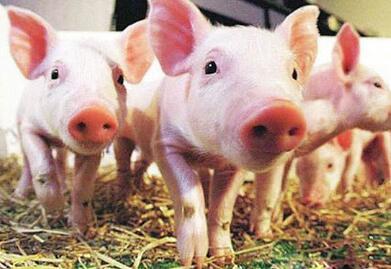 2017年10月14日(20至30公斤)仔猪价格行情走势