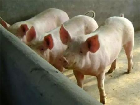 秋冬季节如何预防新购仔猪不生病?从这7点做起!