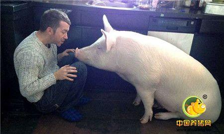 这只小粉猪的名字叫做艾斯特,詹姆斯夫妇俩每天拿着精心准备的食物喂她。