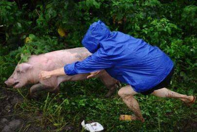 """14级台风""""卡努""""今天正面袭击广东西部,别让你的猪冻着"""