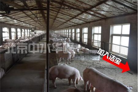 中水华峰养猪场粪污水的微生物处理最新进展