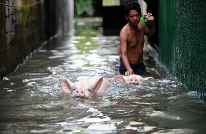 养猪场倒闭的5大原因,最后一个最要命