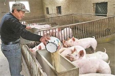 为何酒店都青睐他养的猪?