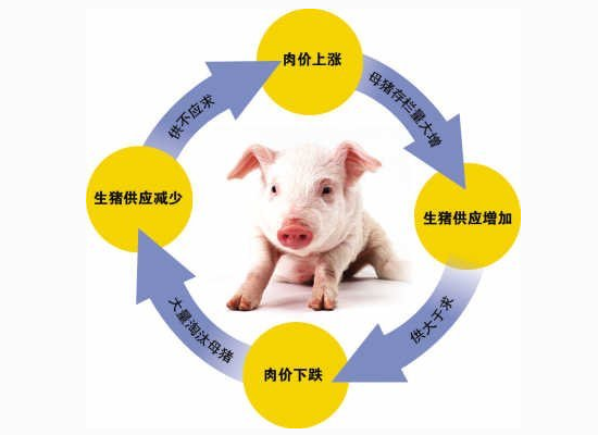 """我国""""猪周期""""的形成,猪价下跌原因在此!"""